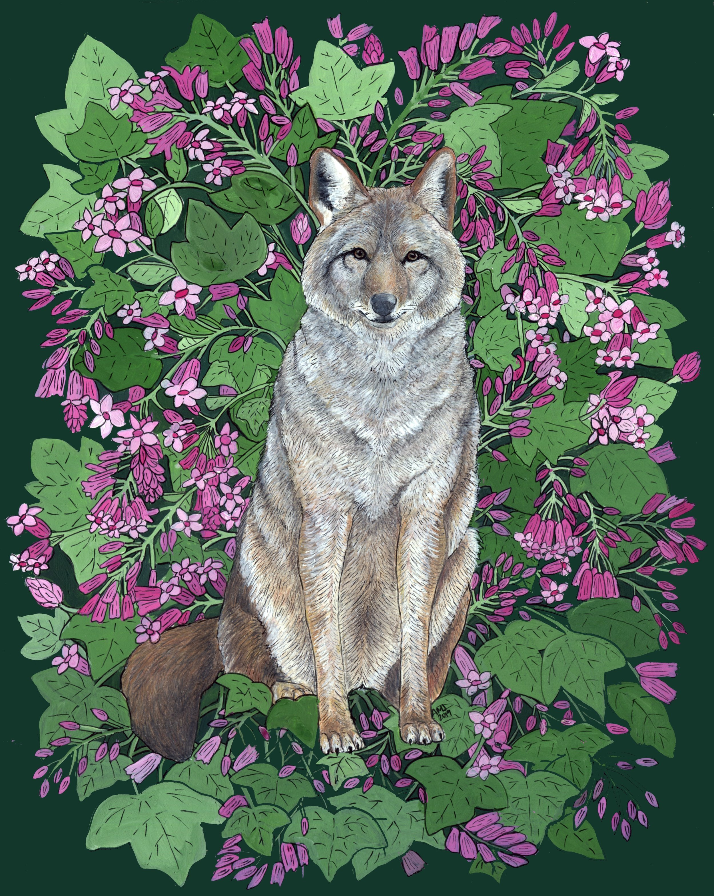 Coyote with Flowering Red Currant