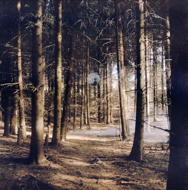 Luna Foresta.jpg