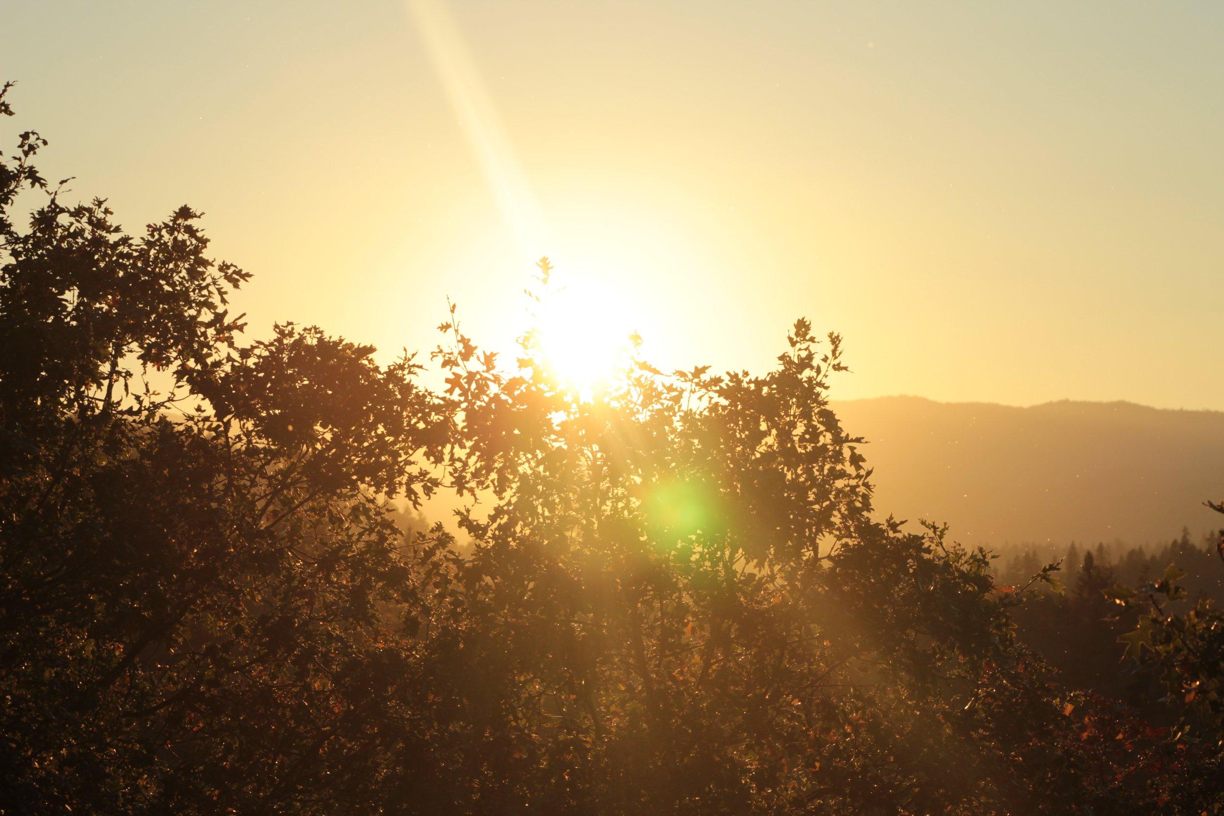 sundown-through-trees-photo.JPG