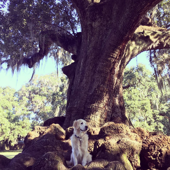 """Tree Of Life"" Audubon Park -  New Orleans, LA"