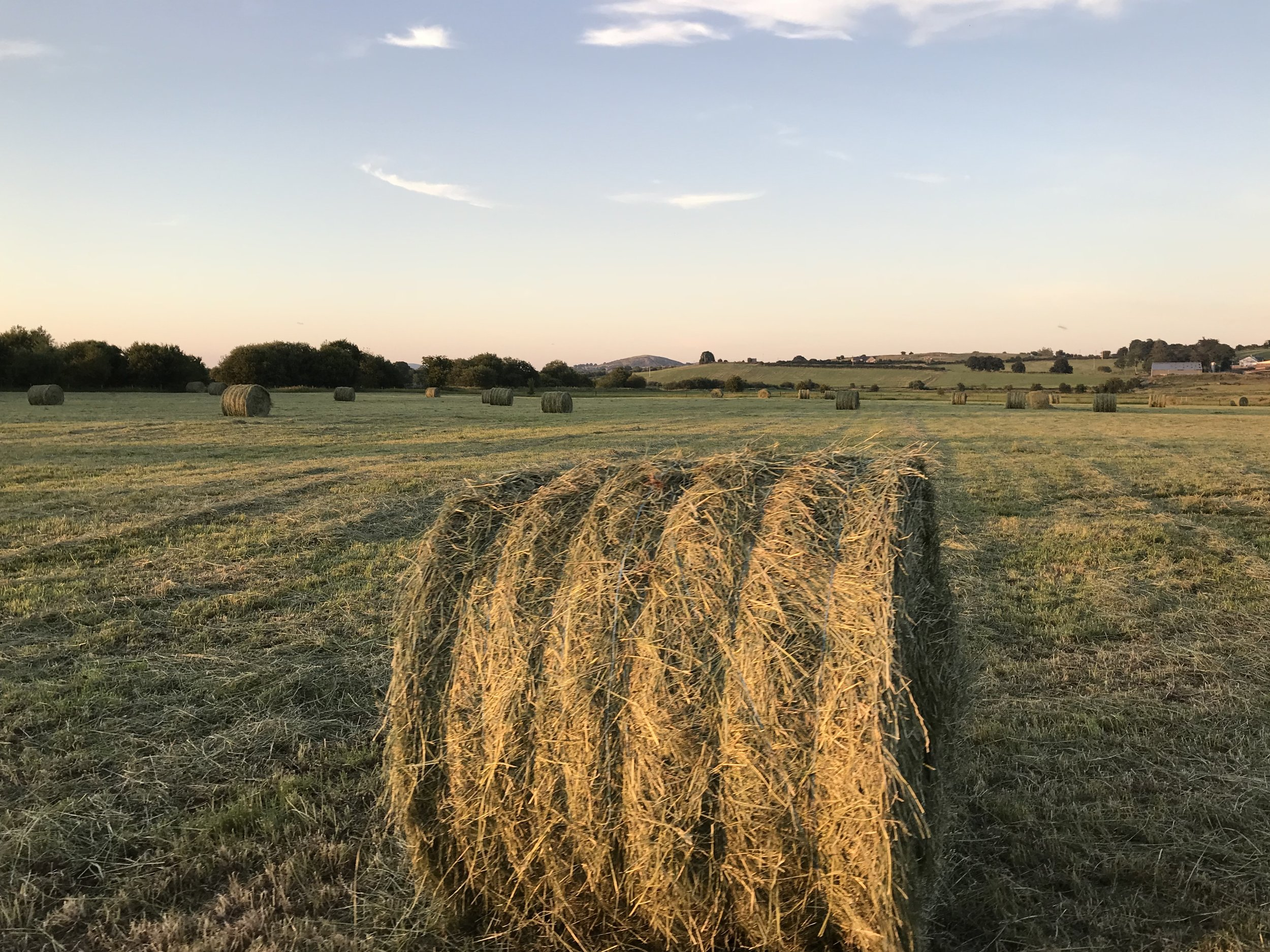 limerick-hay