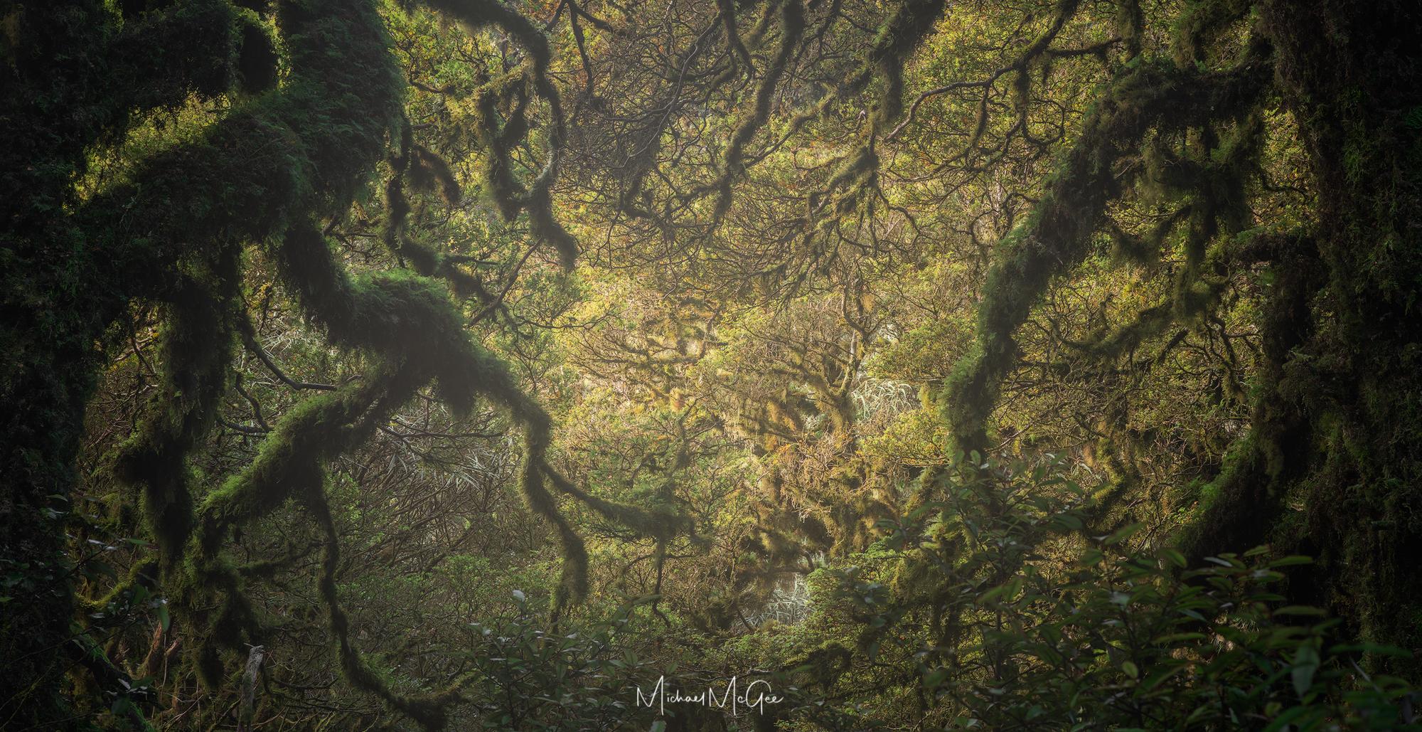 Kapakapanui Forest copy.jpg