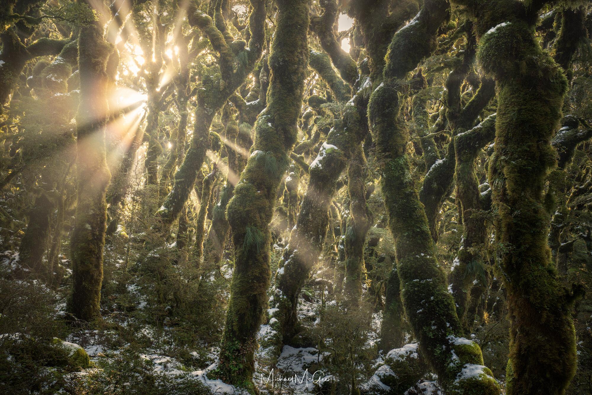 Enchanted Forest 2k.jpg