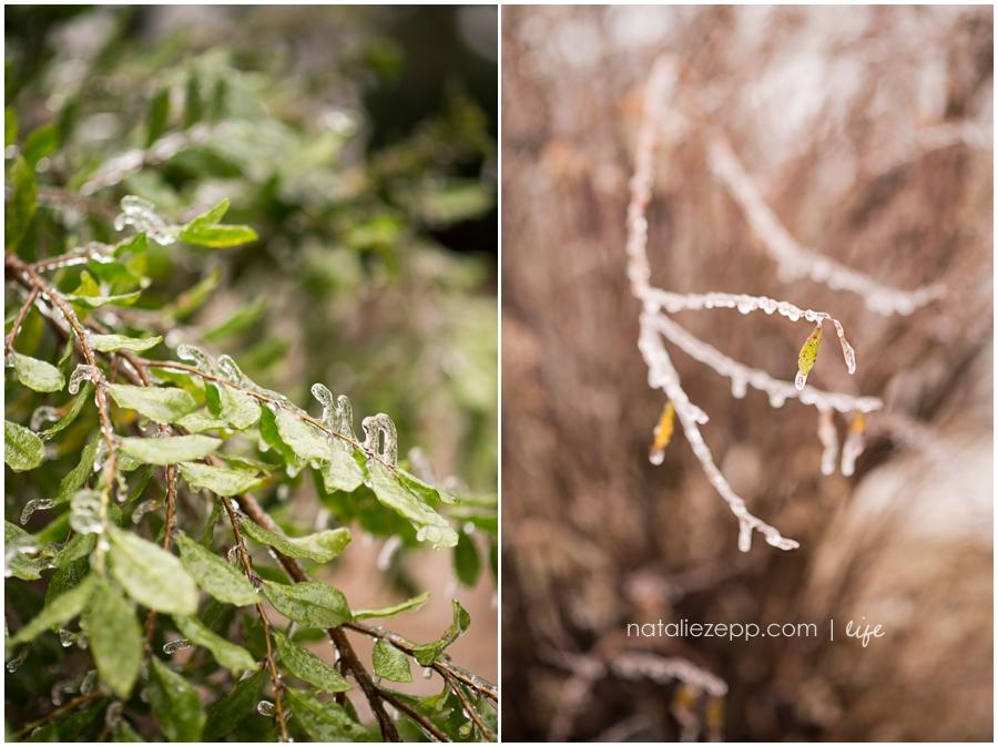 frozen greens