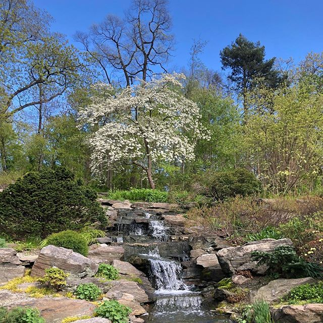 ZEN IN THE BRONX AT THE BOTANICAL GARDENS. #37SX