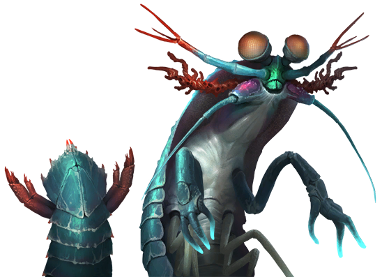 Arthropoid_19.png