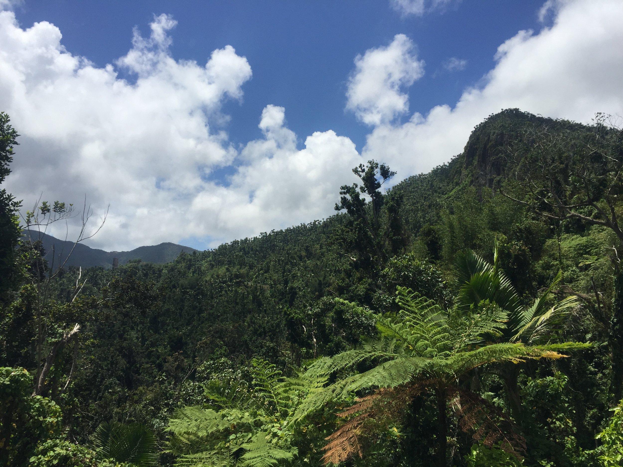 El Yunque.JPG