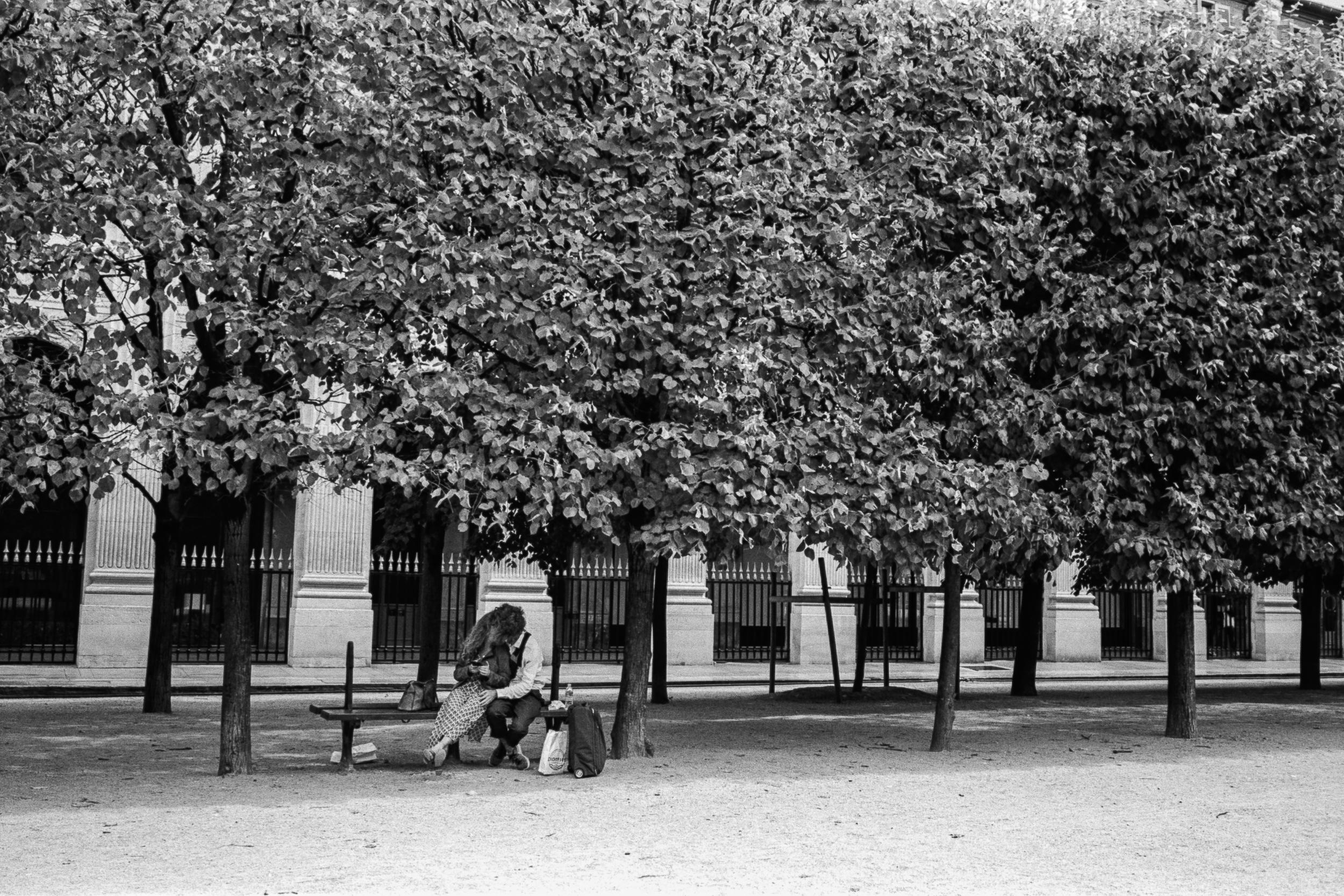 Jardin du Palais-Royal, Paris, 2019.