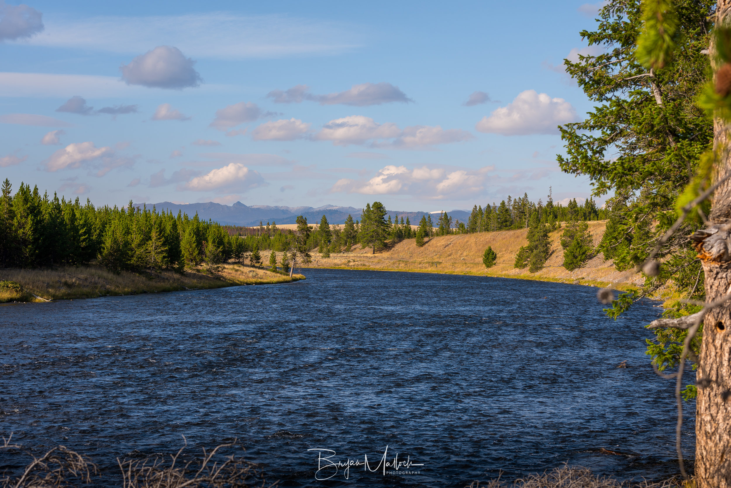The Yellowstone River greets us as we enter the park through West Yellowstone