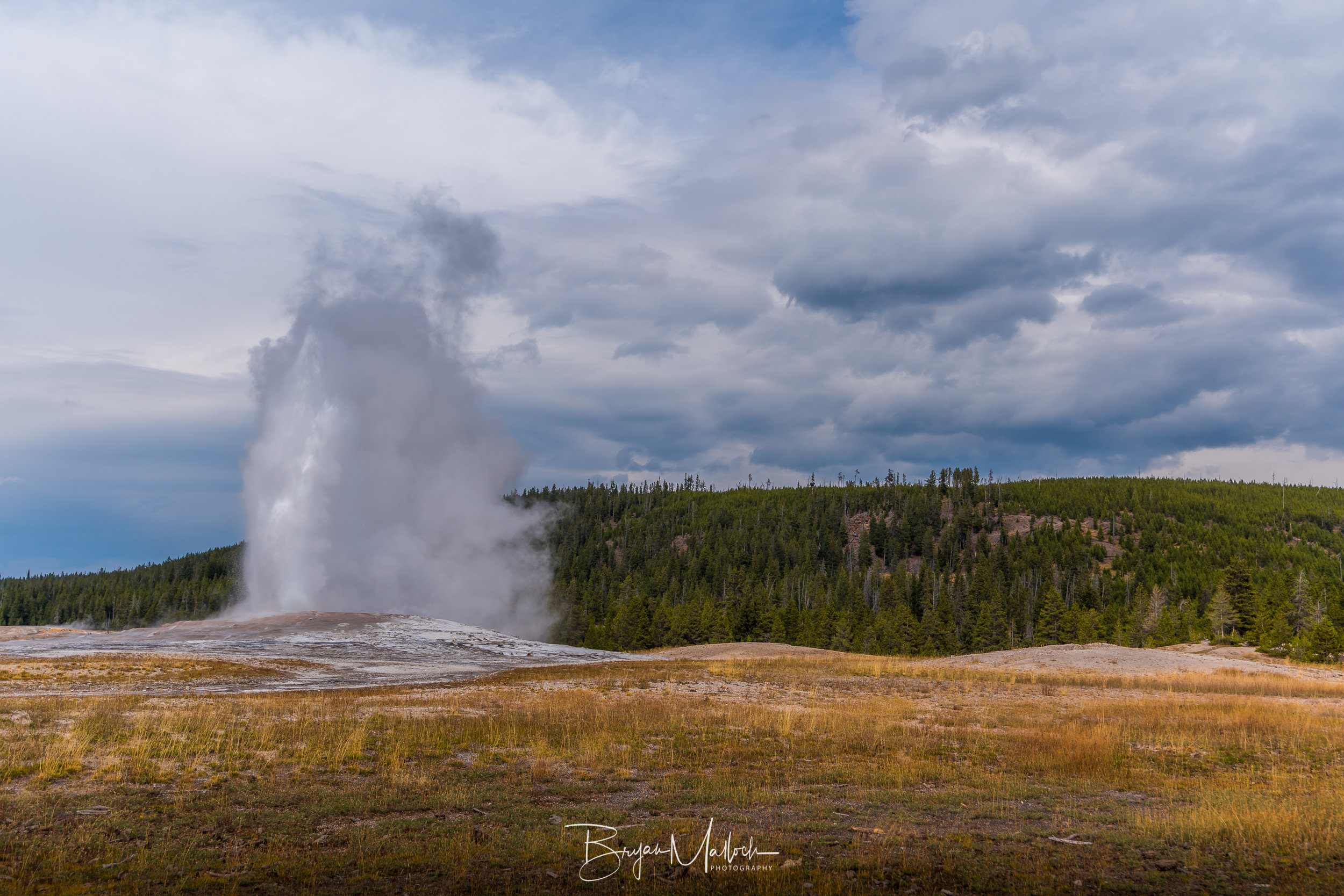 Old Faithful showing up right on time