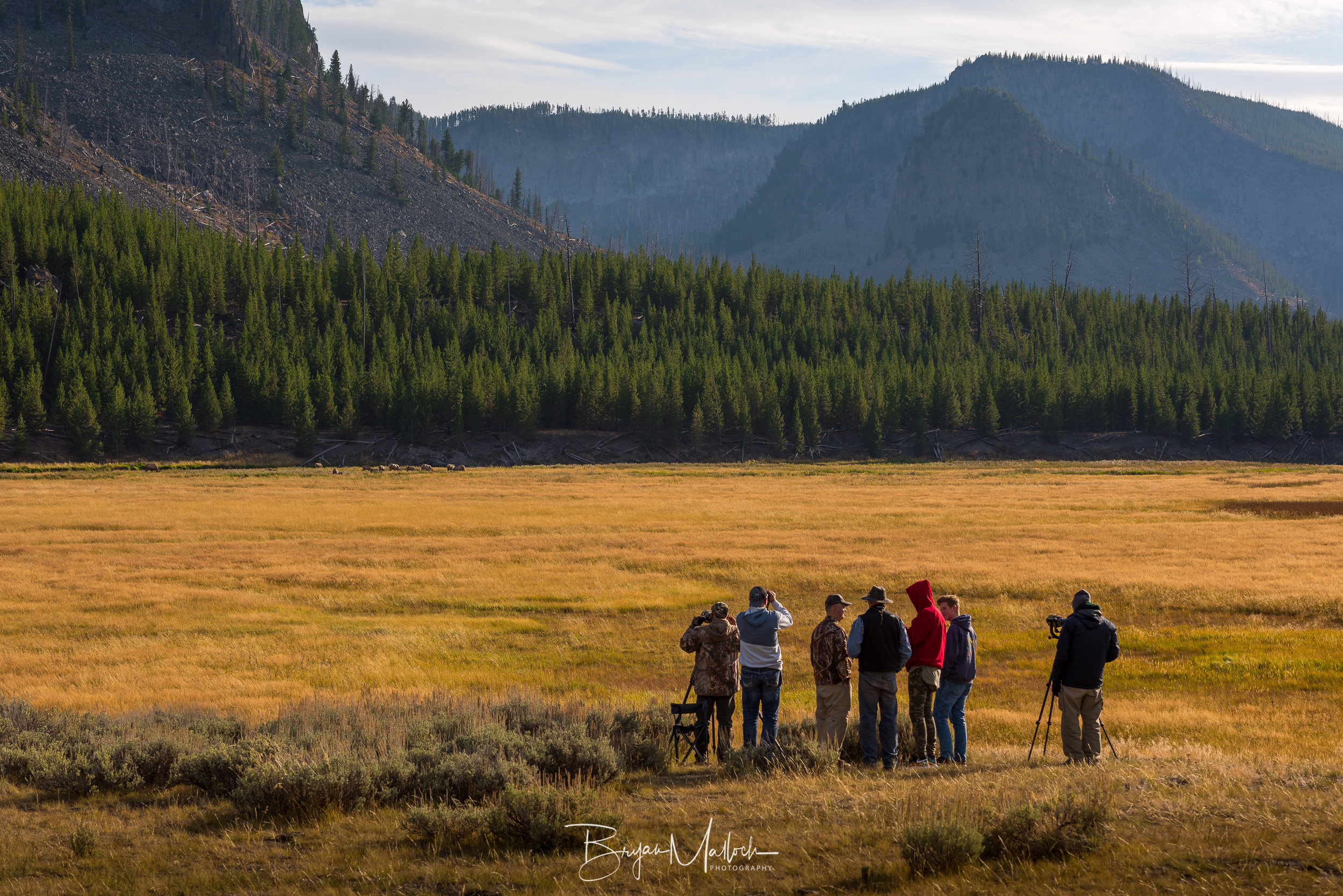 A pack of wild photographers studies a gang of Elk in Madison Valley