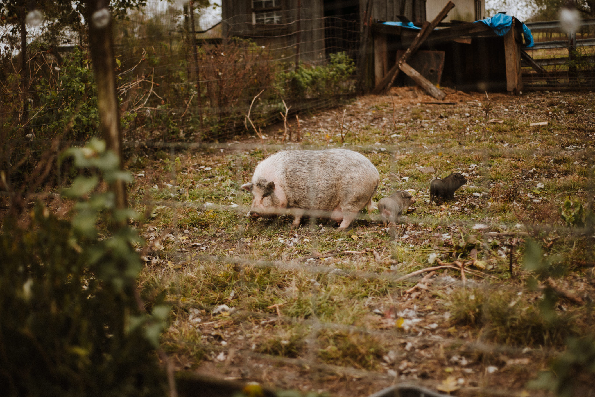 ApkePhotography_Tricia+Mike_WestVirginiaWedding_Farm_10.jpg