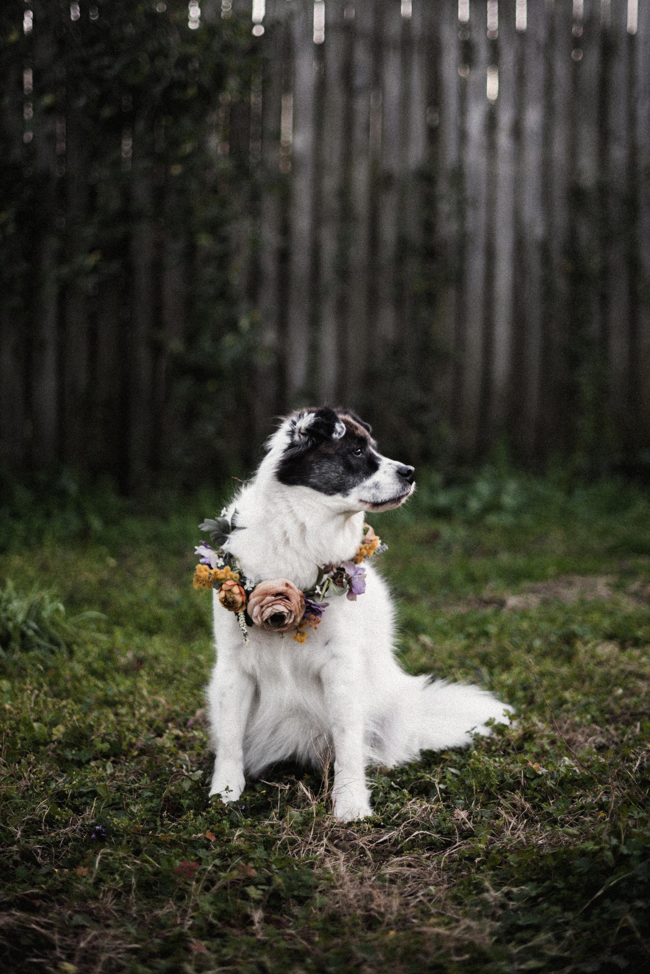 booboo-a-dog-flower-crowns-15-dsatcrop.jpg