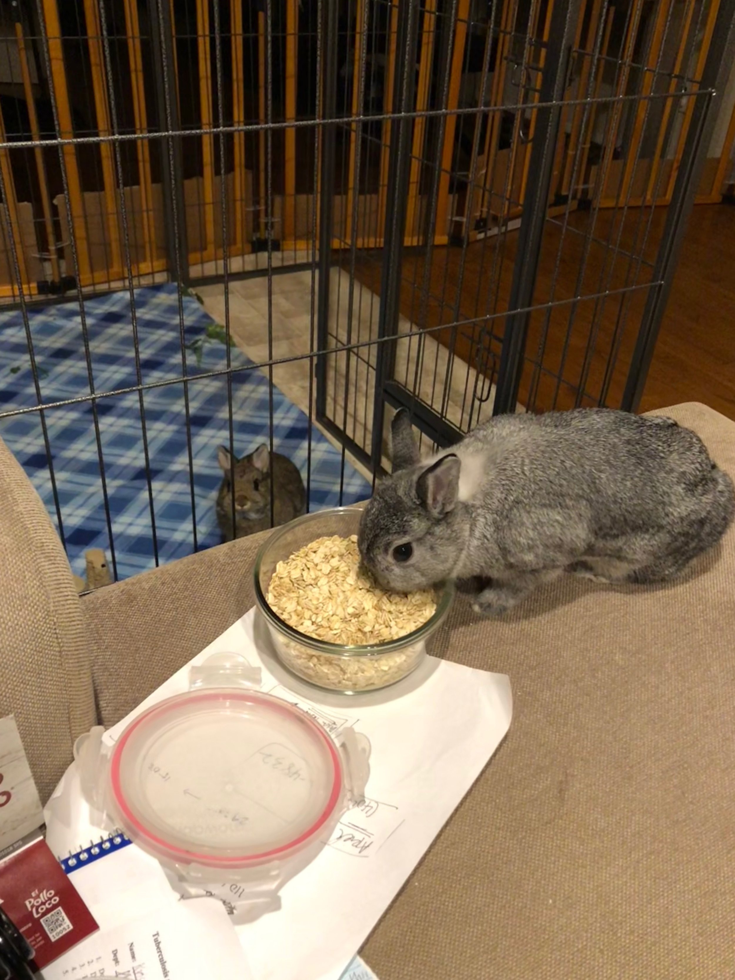 Cookie looking and wanting oats while Gizmo eats.jpeg