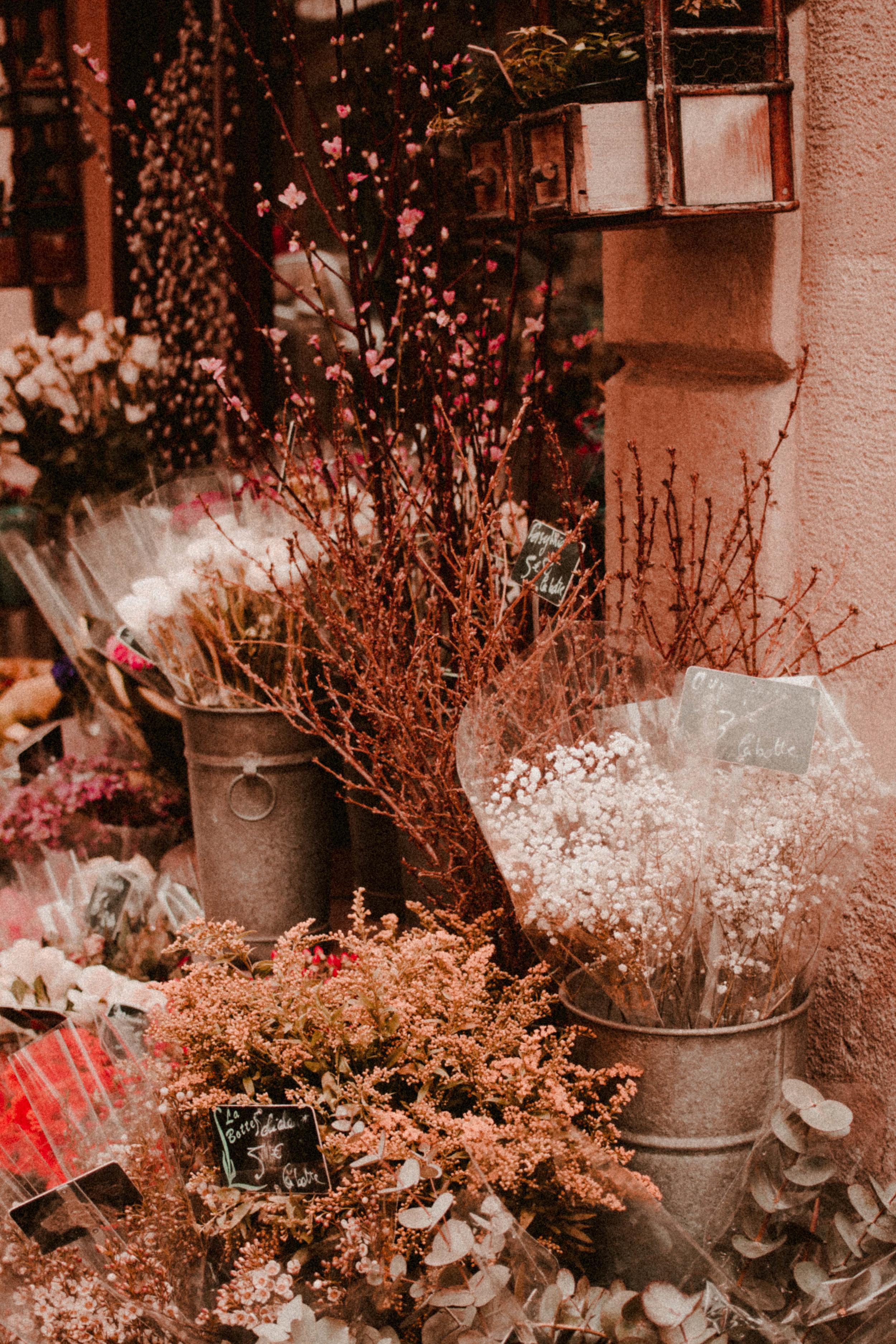 Paris Diary Rush and Teal-6.jpg