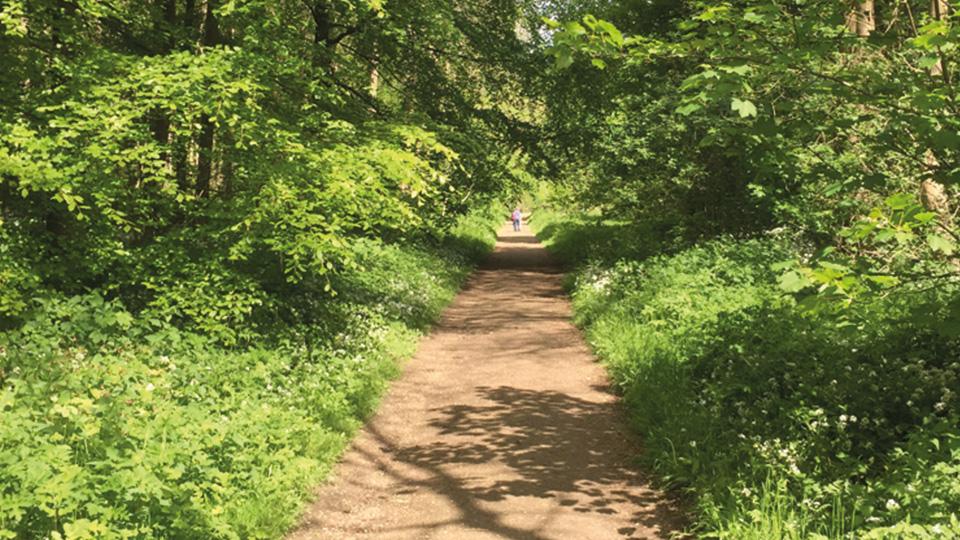 Millington Wood Nature Reserve -