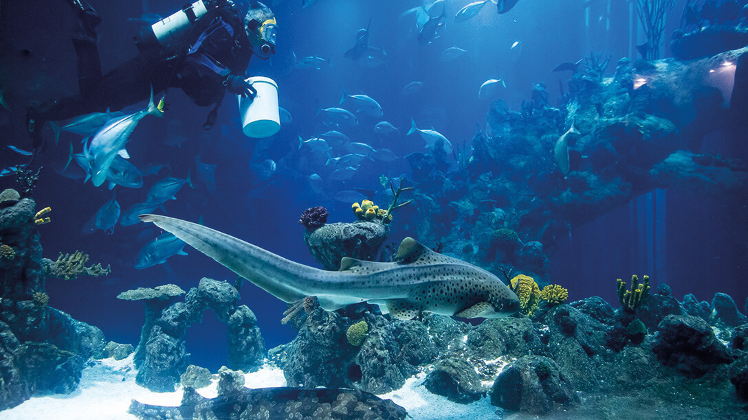 Highfield-Farm-Things-To-Do-The-Deep-Spot-Sharks.jpg