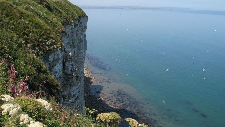 RSBP Bempton Cliffs Nature Reserve -