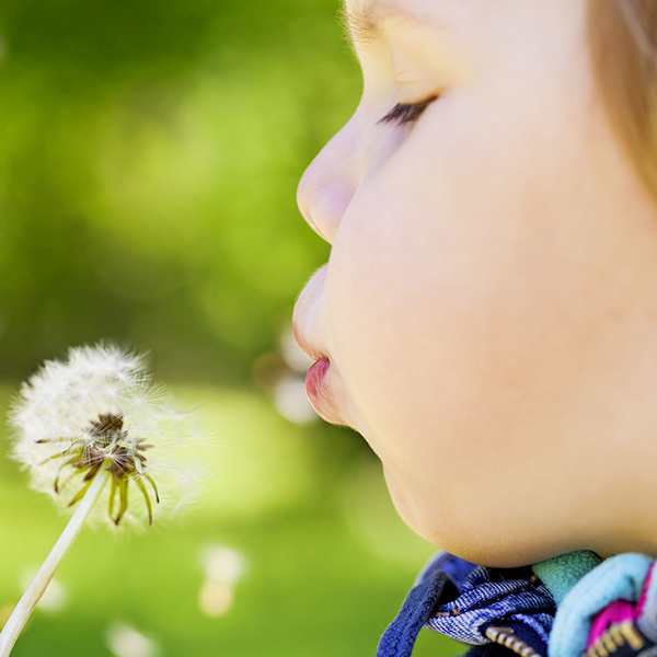 02 Lead HAYFEVER stock-photo-caucasian-blond-baby-girl-blows-on-a-dandelion-flower-in-a-park-selective-focus-on-lips-289391267.jpg
