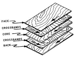 Grain directions via  Wood Technology