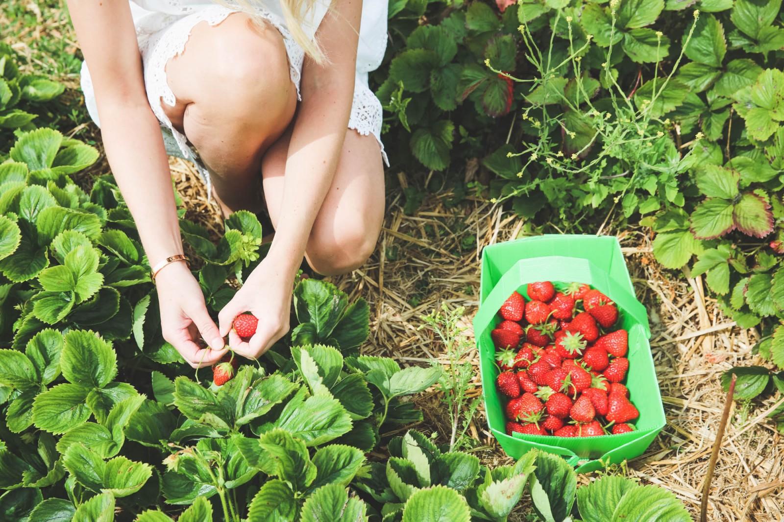 fruit-picking-28-of-83-1600x1066.jpg