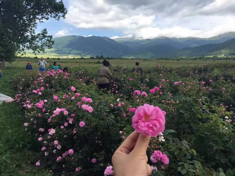 yana-rose-yana-roses-and-field-4a.jpg