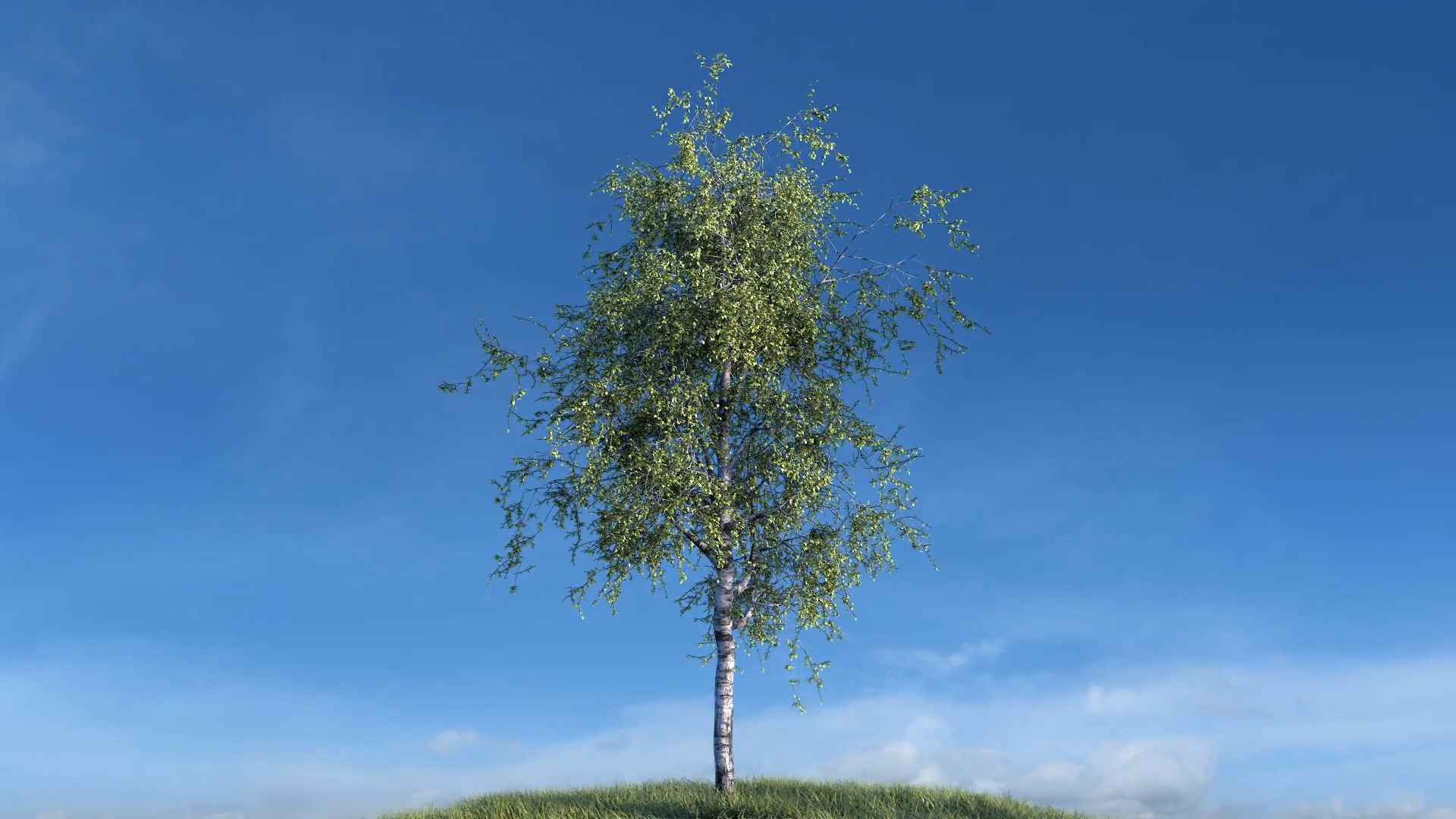 growing-birch-tree-against-sky-with-alpha-matte-cg-animation-full-hd_hw7ikrvi__F0003.png