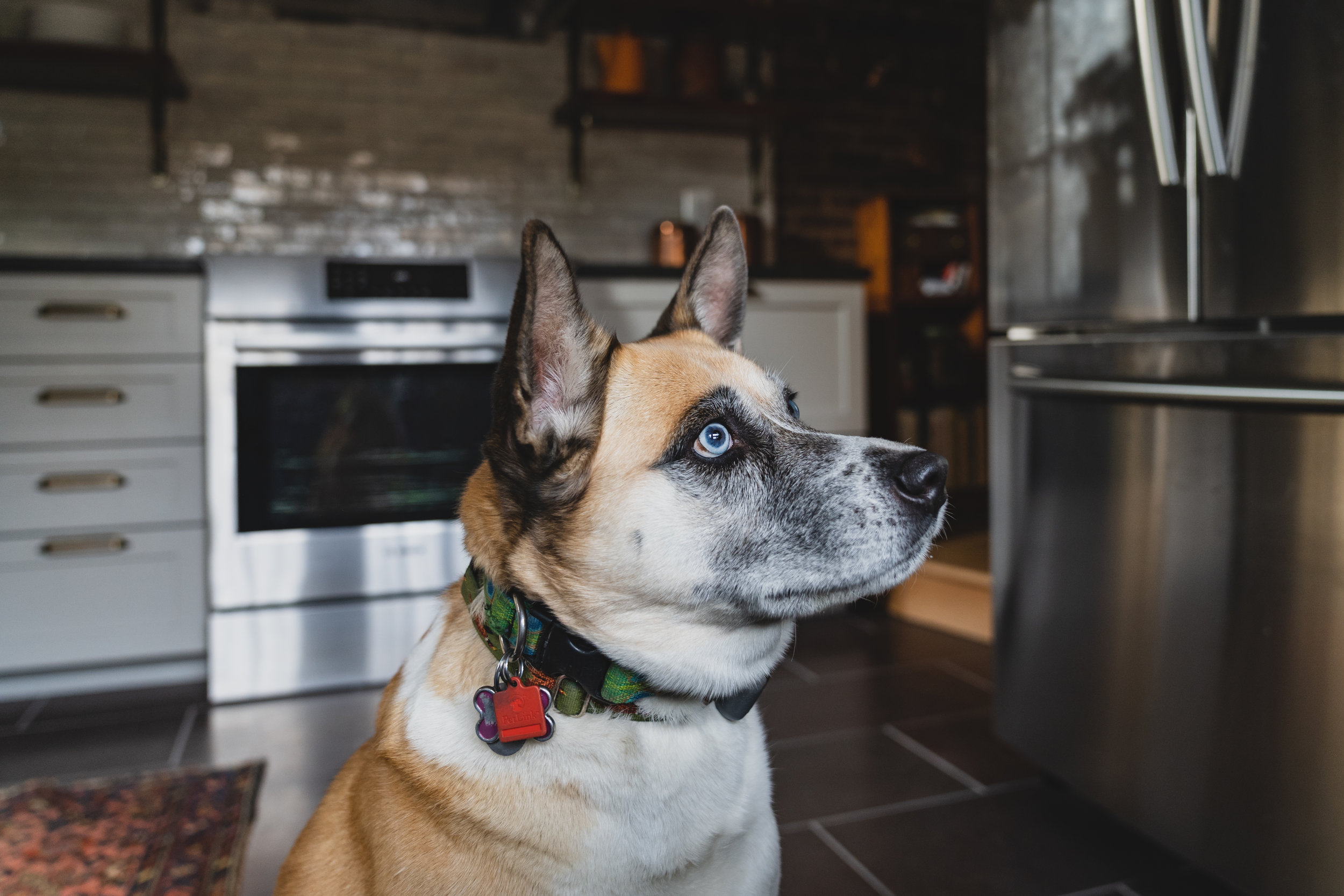 A client's dog, Mack enjoying her  new kitchen .