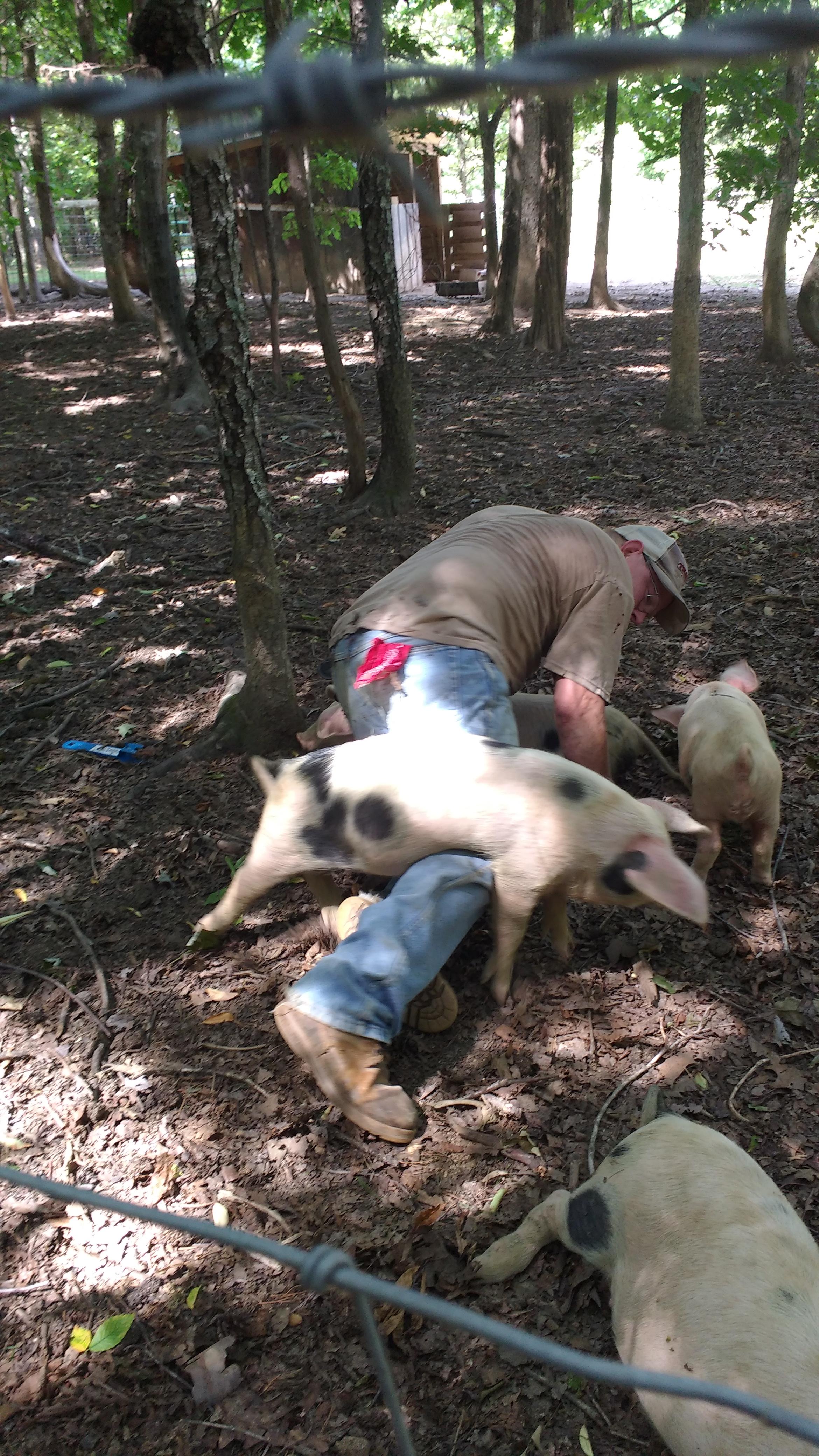 Piggie Iggie Too Biggie