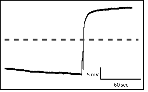 Fertilization-evoked depolarization in X. laevis eggs (recording by Wozniak, unpublished). Line denotes 0 mV.