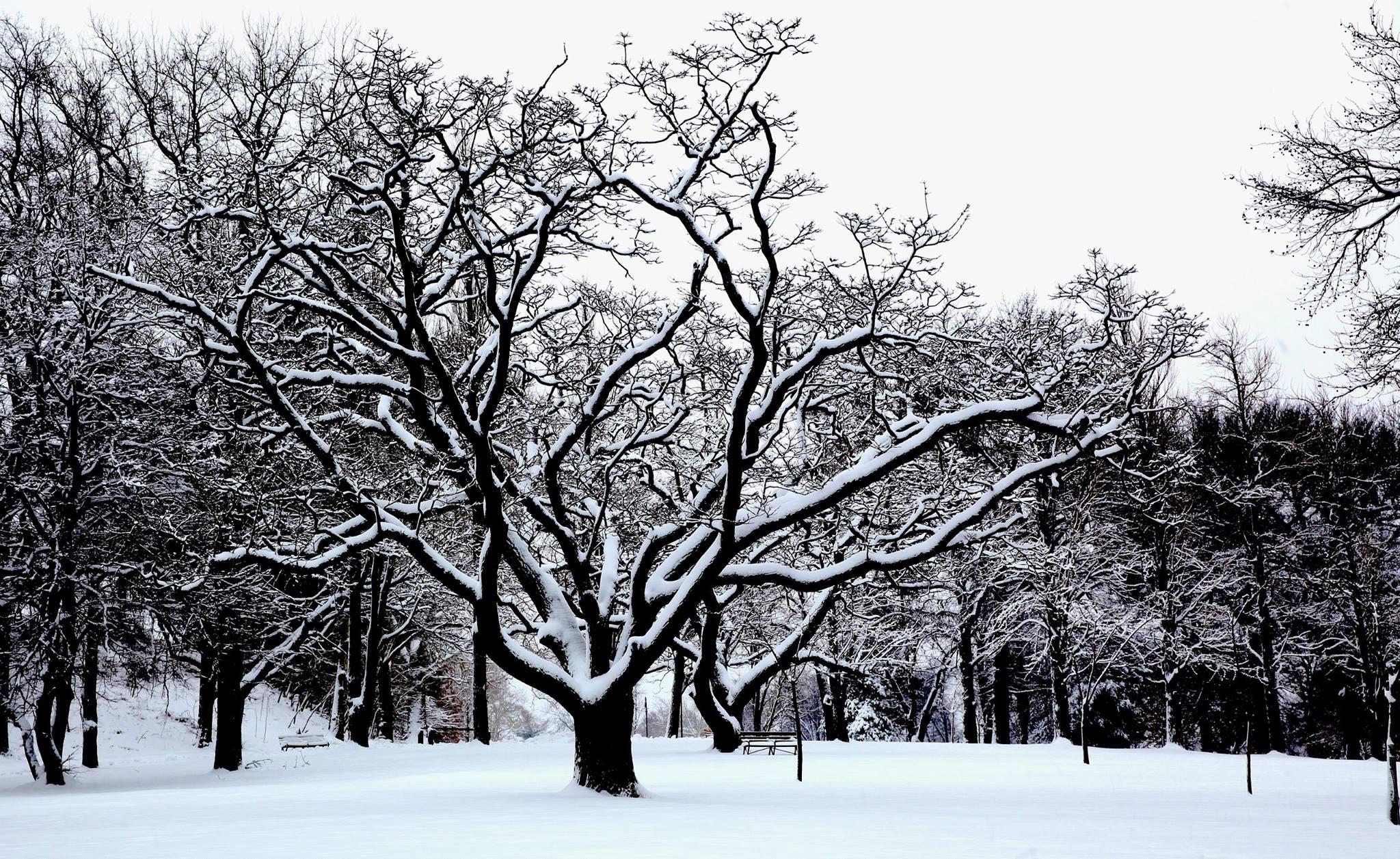 snow-services.jpg