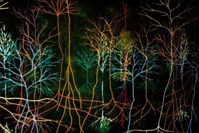 Andrew Carnie, detail from Magic Forest installation, 2002
