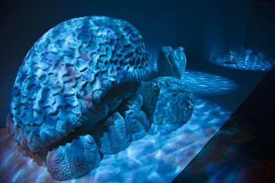 Sweet-Barrier-Reef-detail-Sugar-2009-28.jpg