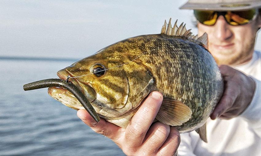shryock-senkofish02.jpg