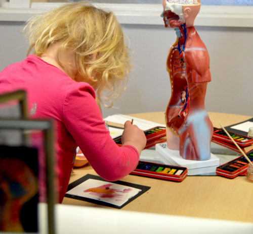 Watercolour representations of organs inside the body