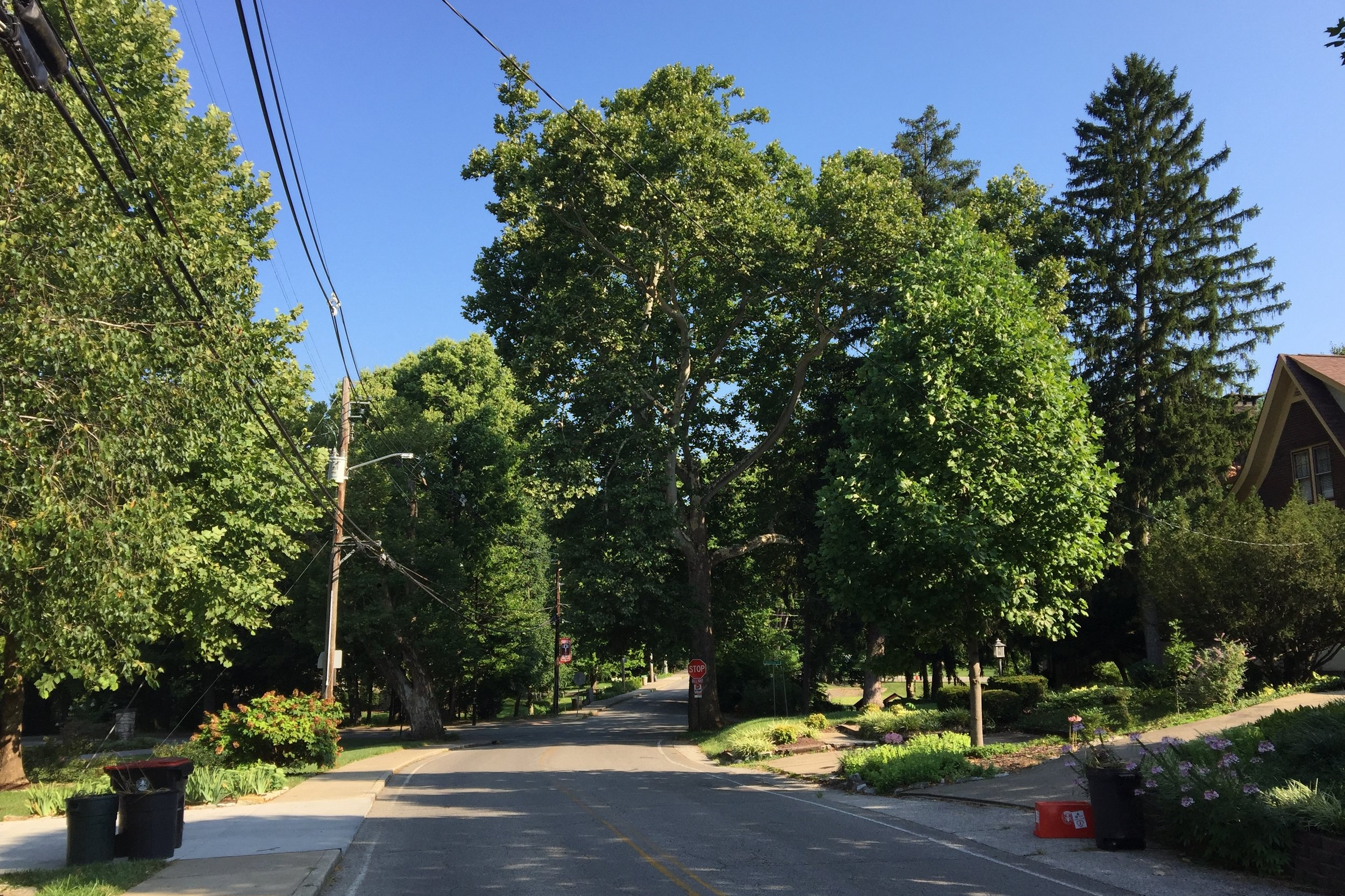 Does your yard need a tree? - The BNA Tree Canopy Program allows neighbors to request a tree(s) be planted in their front or side yard for a fraction of the cost.