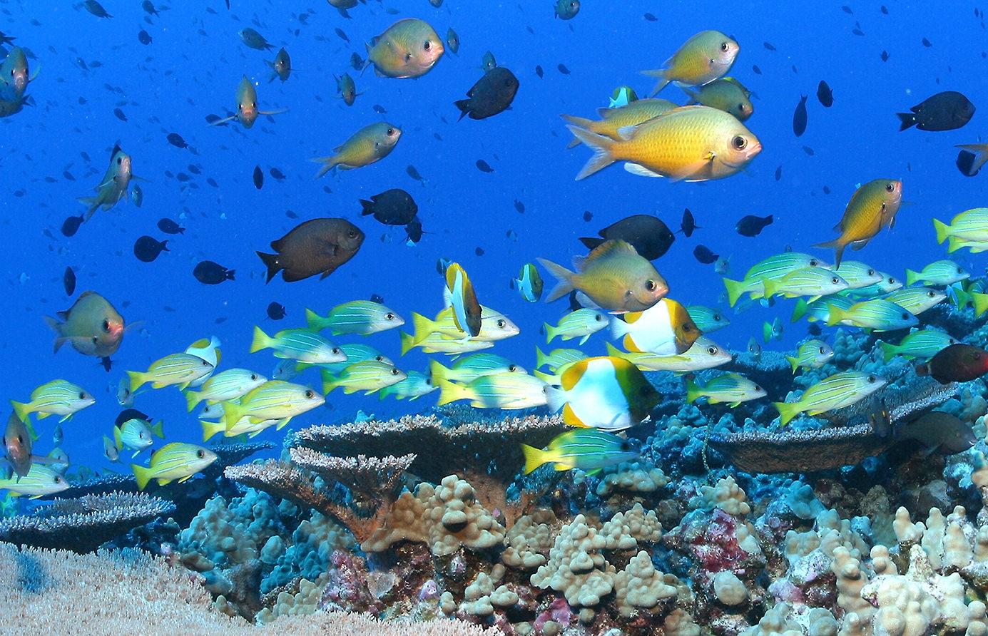 Papahānaumokuākea Marine
