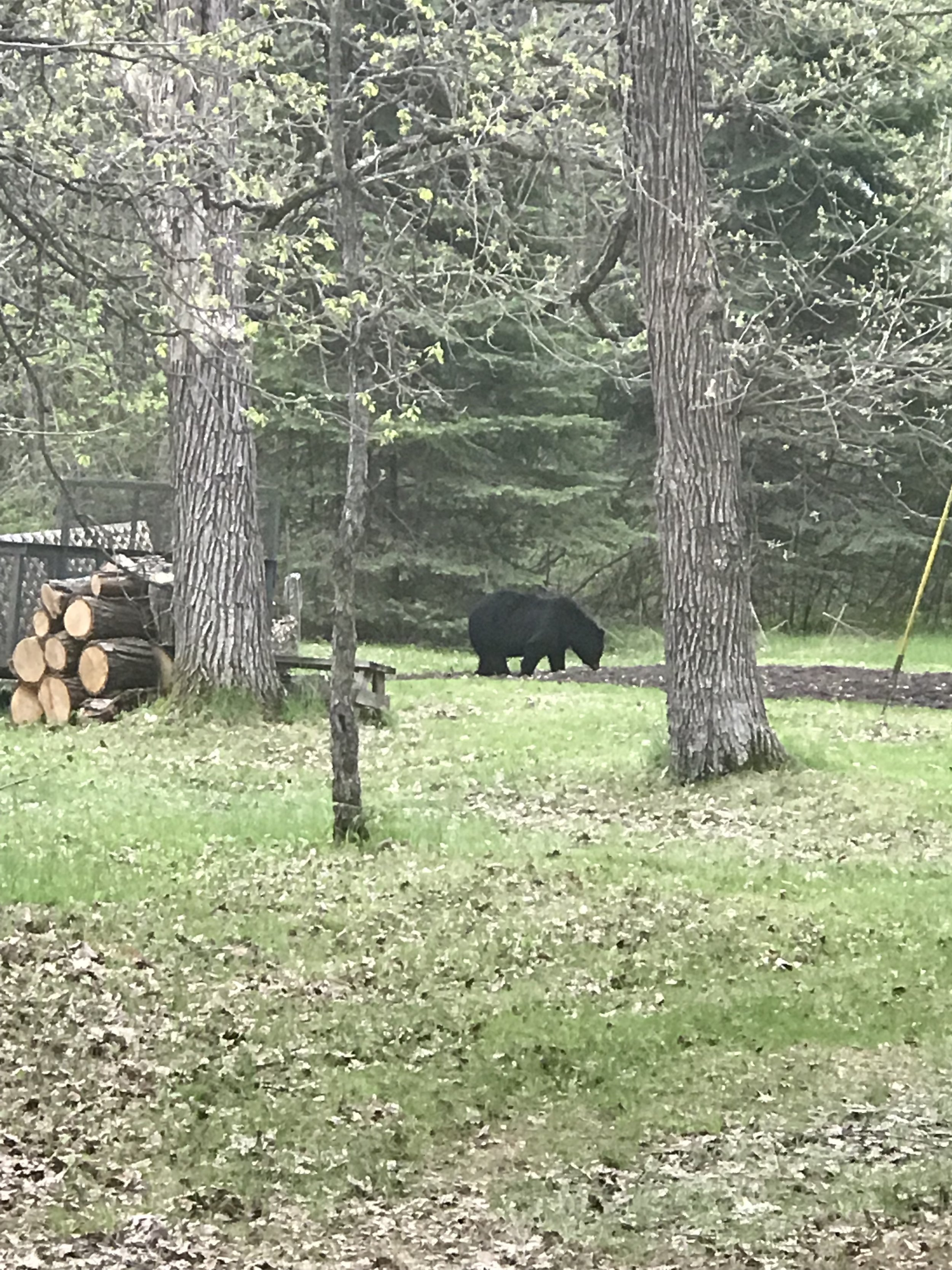 Smokey is about 50 yards from our property.