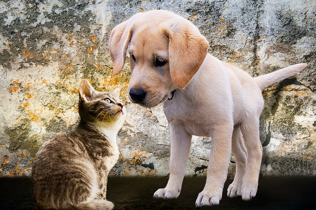 animals-2198994_640.jpg