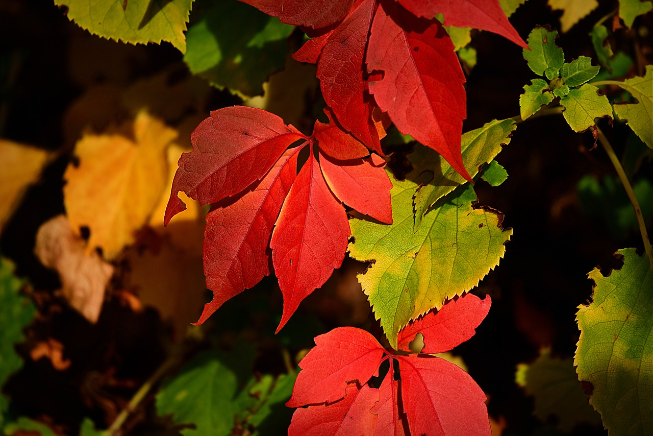 autumn-leaf-3734004_1280.jpg