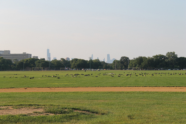 Looking north from the center of Washington Park. Photo by Connie Ma via  flickr