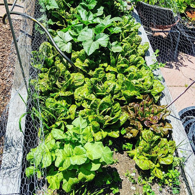 We take fresh ingredients serious! Check out our Chef Thierry vegetable garden
