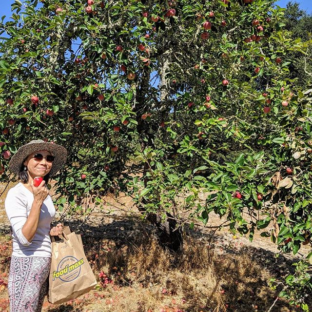 Lina was just picking some delicious Gravenstein apples in Sonoma. She will give you one or two if you ask nicely !!!😀 #gravenstein #french #bistro #organic