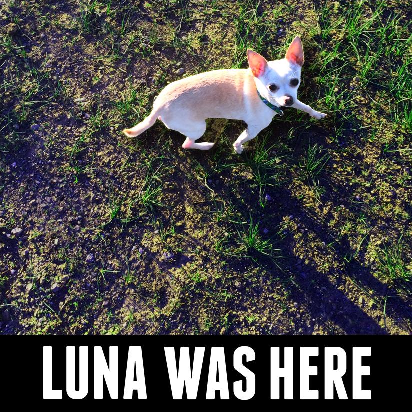 Luna was here flat for print.jpg