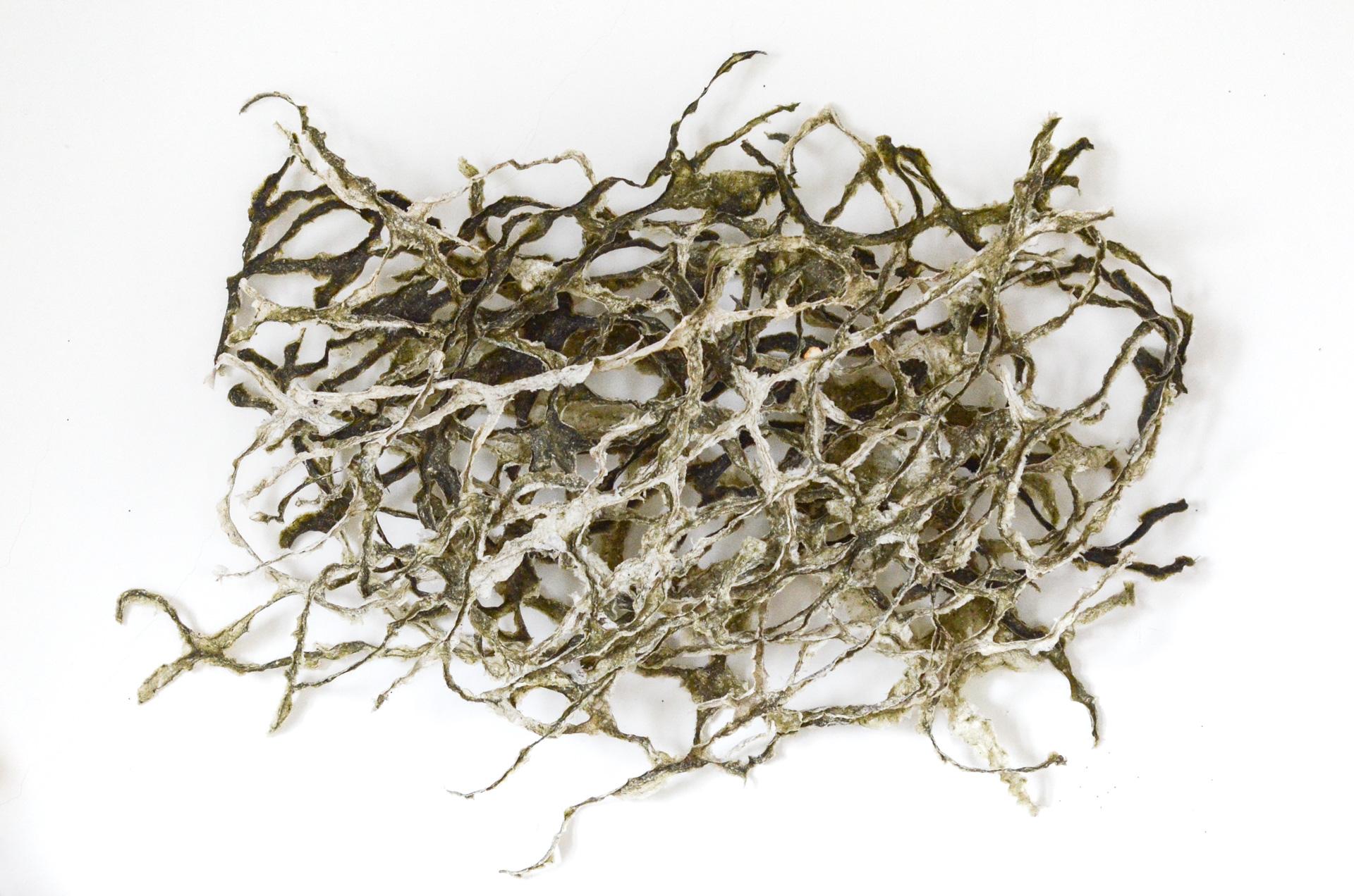 Blind Wave Drawing from Sputnik Seaweed #6