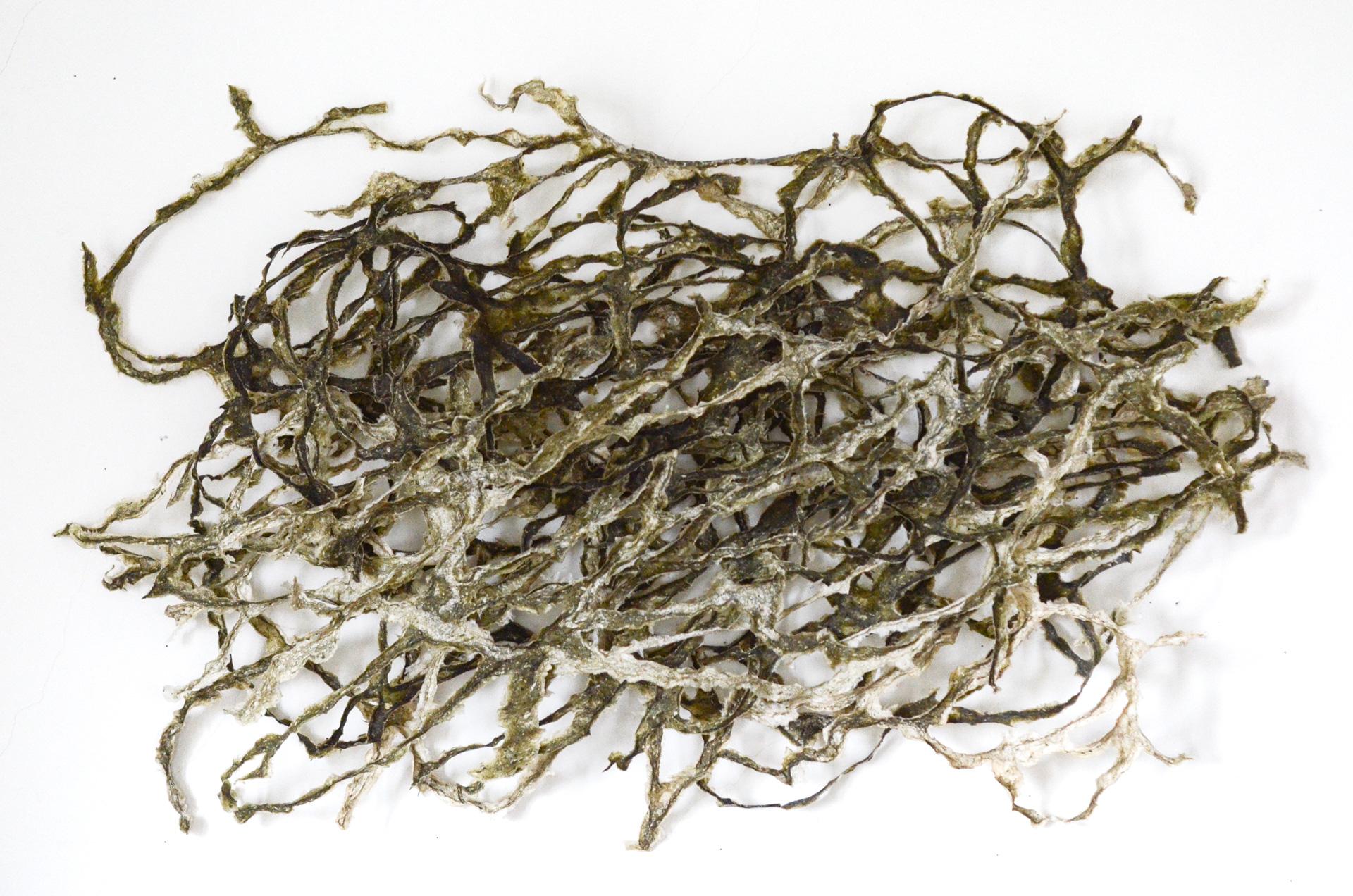Blind Wave Drawing from Sputnik Seaweed #7