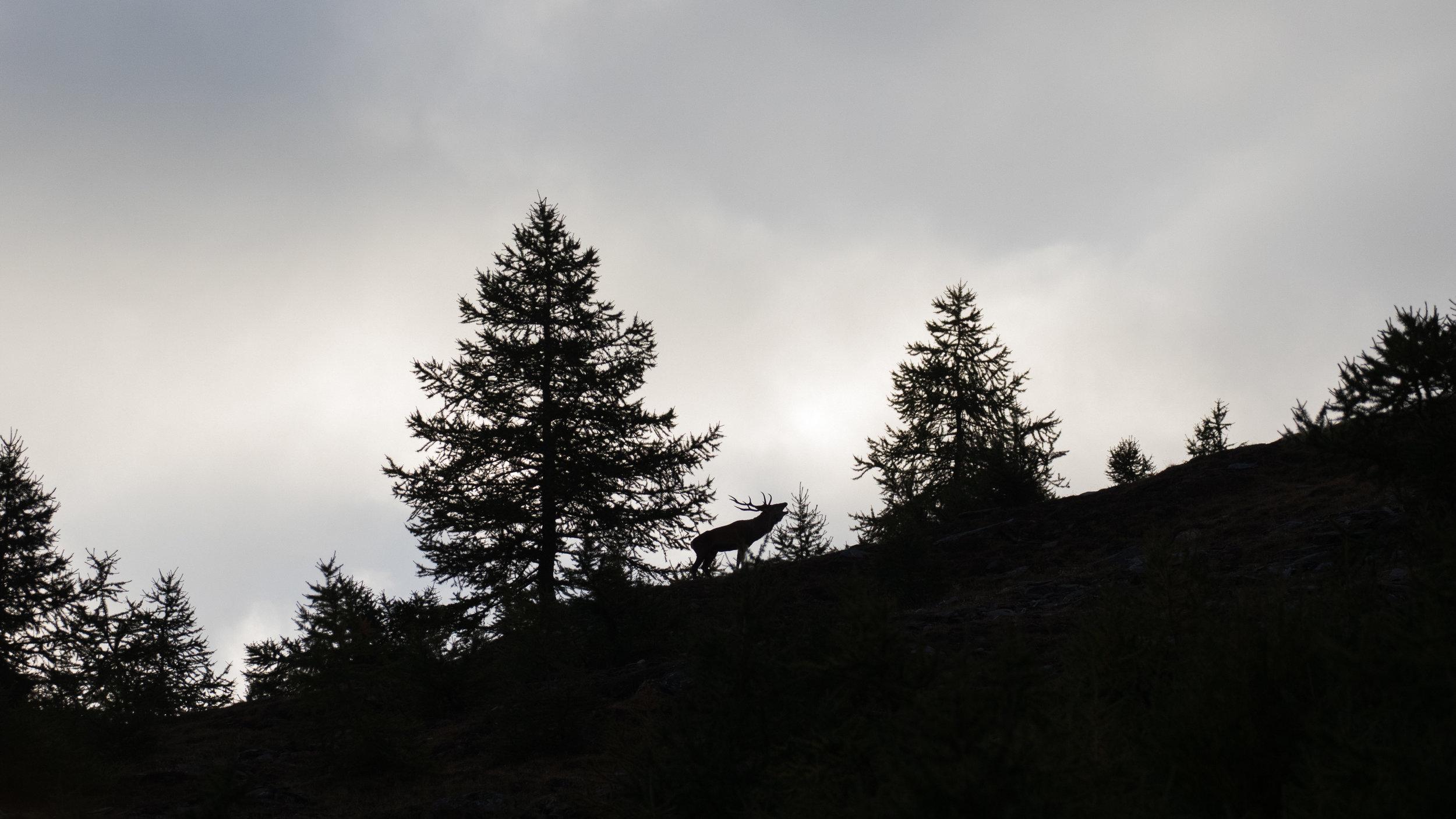 red-deer-rut-photo-workshop
