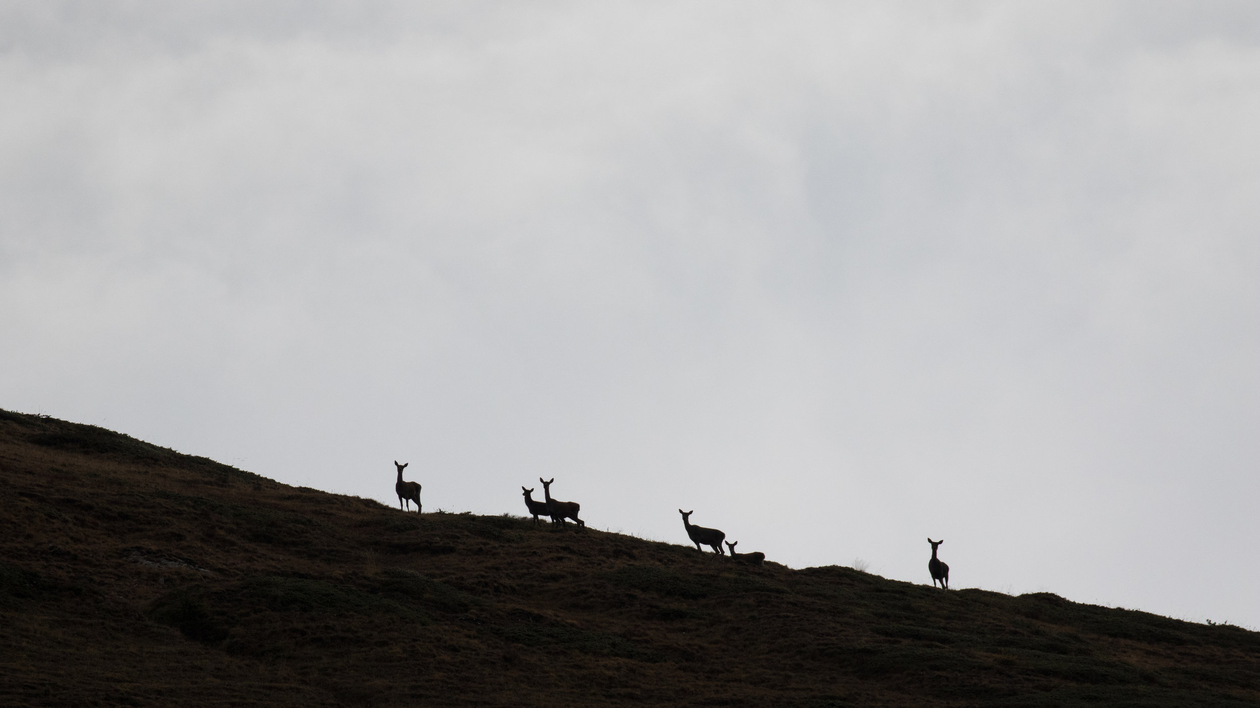 red-deers-photography