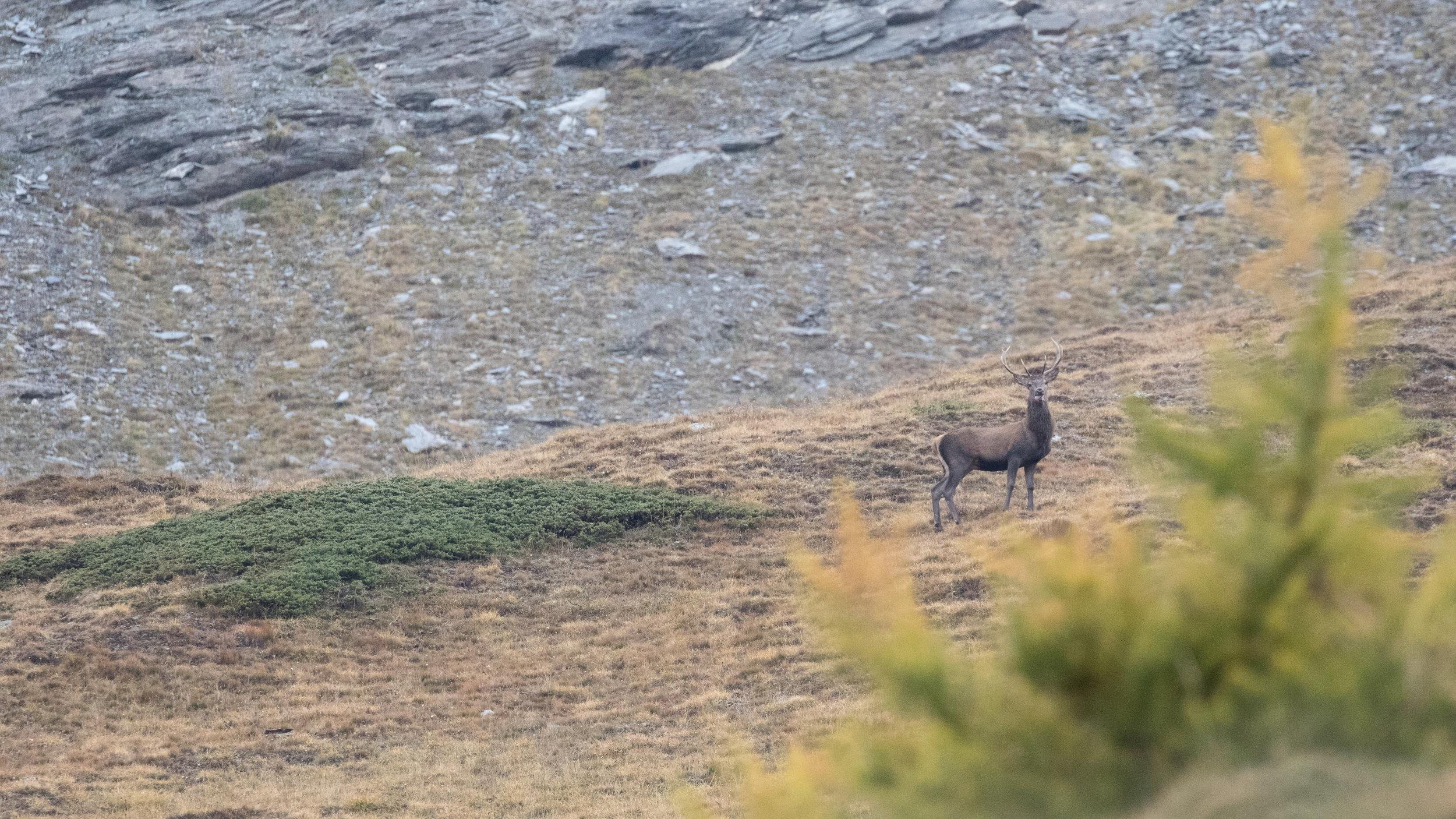 red-deer-rut-photo-tour-salva-fauna