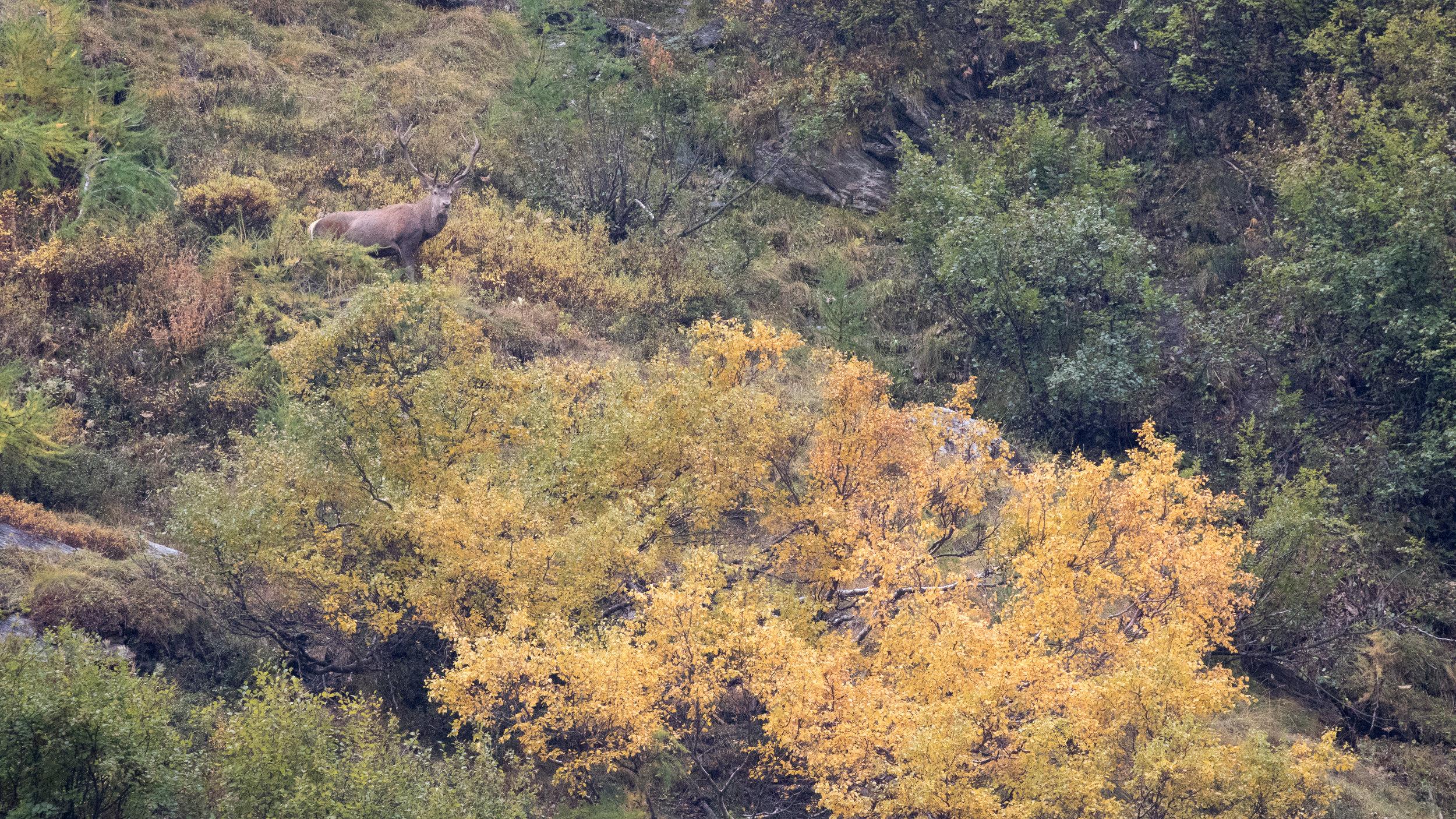 red-deer-photography-salva-fauna